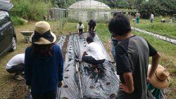 農業体験(玉ねぎ)