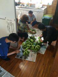 バナナ収穫販売準備